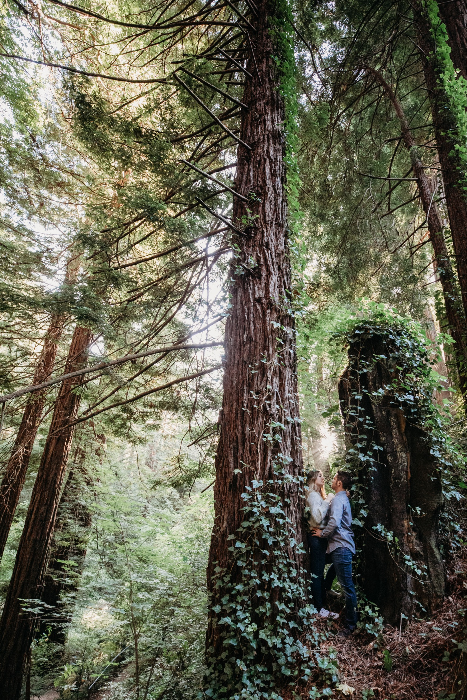 Couple stands together in between large redwood tress in Big Sur during their engagement photoshoot.